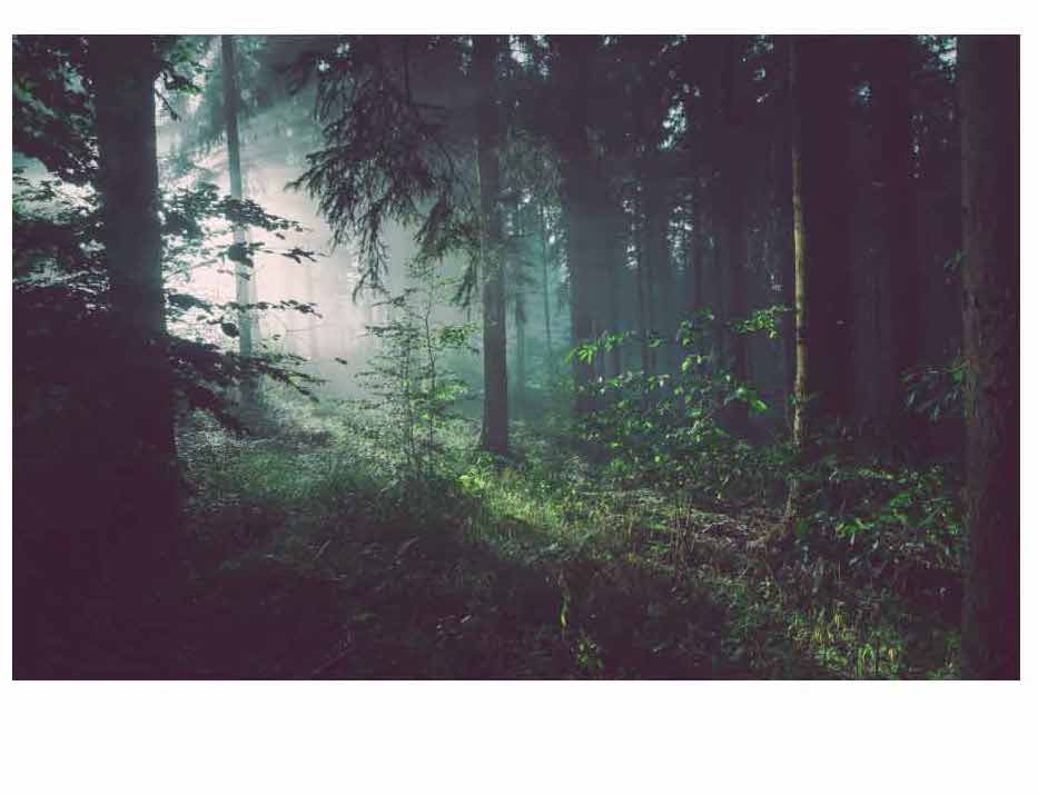 A dense forest resembling the one described in the way through the woods